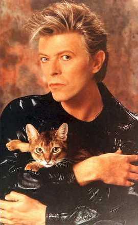Bowie-z-kotem